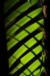 Australasia;Australia;frond;Litchfield-N.P.;Litchfield-National-Park;Litchfield-NP;N.T.;Northern-Territory;NT;palm;palm-frond;palm-fronds;palms;pattern;Top-End