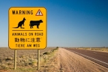 Animals-on-Road-Warning-Sign-Stuart-Highway;arid;Australasia;Australasian;Australia;Australian;Australian-Desert;Australian-Deserts;Australian-Outback;back-country;backcountry;backwoods;cattle-sign;cattle-signs;country;countryside;cow-sign;cow-signs;Danger-Sign;Danger-Signs;desert;deserts;dry;kangaroo-sign;kangaroo-signs;kangaroo-warning-sign;kangaroo-warning-signs;Outback;Port-Augusta;red-centre;remote;remoteness;rural;S.A.;SA;sign;signs;South-Australia;Stuart-Highway;wandering-stock-sign;wandering-stock-signs;Warning-Sign;Warning-Signs;wilderness;yellow