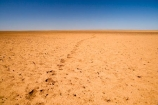 arid;Australasia;Australasian;Australia;Australian;Australian-Desert;Australian-Deserts;Australian-Outback;back-country;backcountry;backwoods;barren;country;countryside;desert;Deserts;dry;empty;flat;foot-print;foot-prints;foot_print;foot_prints;footprint;footprints;hot;Oodnadatta-Track;Outback;outback-travel;red-centre;remote;remoteness;rural;S.A.;SA;sand;South-Australia;track;tracks;vast