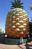 australasia;Australia;australian;big;big-fruit;fruit;fruits;giant;huge;icon;icons;pattern;patterns;pinapples;pine_apple;pine_apples;pineapple;Queensland;Sunshine-Coast;the-big-pineapple;tropical
