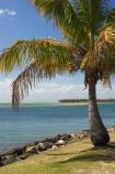 australasia;Australia;australian;beach;beaches;coast;coastal;inlet;inlets;noosa;noosa-inlet;noosa-River;noosaville;palm;palm-tree;palm-trees;palms;queensland;rivers;Sunshine-Coast