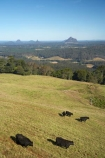agricultural;agriculture;Australasian;Australia;Australian;Candle-Mountain;country;countryside;cow;cows;farm;farming;farmland;farms;field;fields;Glass-House-Mountains;Glasshouse-Mountains;livestock;Maleny;meadow;meadows;Mount-Beerwah;Mt-Beerwah;Mt.-Beerwah;paddock;paddocks;pasture;pastures;Qld;Queensland;rural;stock;Sunshine-Coast;volcanic-plug;volcanic-plugs
