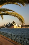 sydney;cove;harbour;harbours;harbors;harbor;icon;icons;australian;landmark;landmarks;palm;palms;footpath;sidewalk;fence;rail;railing;opera-house;opera;house;australia
