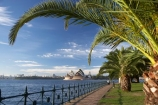 architectural;architecture;Australasia;Australia;Bennelong-Point;harbors;harbours;icon;iconic;icons;Kirribilli;landmark;landmarks;Milsons-Point;N.S.W.;New-South-Wales;NSW;Opera-House;palm-tree;palm-trees;Sydney;Sydney-Harbor;Sydney-Harbour;Sydney-Opera-House