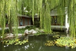Australasia;Australia;Chinese-Garden;Chinese-Gardens;Darling-Harbour;garden;gardens;N.S.W.;New-South-Wales;NSW;pond;ponds;pool;pools;Sydney;water;willow;willow-tree;willow-trees;willows