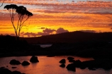 Australasian;Australia;Australian;Bay-of-Fires;Binalong-Bay;cloud;clouds;coast;coastal;coastline;coastlines;coasts;dusk;East-Tasmania;Eastern-Tasmania;eucalypt;eucalypts;eucalyptus;eucalytis;evening;foreshore;gum;gum-tree;gum-trees;gums;inlet;Island-of-Tasmania;nightfall;ocean;orange;sea;shore;shoreline;shorelines;shores;sky;slies;State-of-Tasmania;sunset;sunsets;Tas;Tasmania;tree;trees;twilight;water