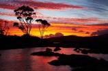 Australasian;Australia;Australian;Bay-of-Fires;Binalong-Bay;cloud;clouds;coast;coastal;coastline;coastlines;coasts;dusk;East-Tasmania;Eastern-Tasmania;eucalypt;eucalypts;eucalyptus;eucalytis;evening;foreshore;gum;gum-tree;gum-trees;gums;inlet;Island-of-Tasmania;nightfall;ocean;orange;sea;shore;shoreline;shorelines;shores;sky;slies;State-of-Tasmania;sunset;sunsets;Tas;Tasmania;tree;trees;twilight;water