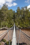 Australasian;Australia;Australian;beautiful;beauty;bridge;bridges;bush;endemic;foot-bridge;foot-bridges;footbridge;footbridges;forest;Forestry-Tasmania;forests;green;hiking-track;hiking-tracks;Huon-River;Huon-Suspension-Bridge;Huon-Swing-Bridge;Huon-Swinging-Bridge;Island-of-Tasmania;native;native-bush;natural;nature;pedestrian-bridge;pedestrian-bridges;scene;scenic;State-of-Tasmania;suspension-bridge;suspension-bridges;swing-bridge;swing-bridges;Tahune-Forest-Reserve;Tas;Tasmania;track;tracks;tree;trees;walking-track;walking-tracks;wire-bridge;wire-bridges;wood;woods