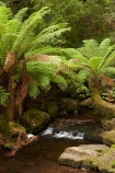 Australasian;Australia;Australian;brook;brooks;cascade;cascades;creek;creeks;Derwent-Valley;falls;fern;ferns;flora;flow;forest;forestry;forests;frond;fronds;green;Island-of-Tasmania;lush;Mount-Field-N.P.;Mount-Field-National-Park;Mount-Field-NP;Mt-Field-N.P.;Mt-Field-National-Park;Mt-Field-NP;native-bush;natural;nature;outdoor;outdoors;scene;scenic;State-of-Tasmania;stream;streams;Tas;Tasmania;undergrowth;water;water-fall;water-falls;watercourse;waterfall;waterfalls;wet