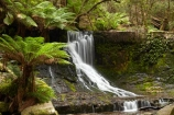 Australasian;Australia;Australian;cascade;cascades;creek;creeks;Derwent-Valley;falls;fern;ferns;frond;fronds;Horseshoe-Falls;Island-of-Tasmania;Mount-Field-N.P.;Mount-Field-National-Park;Mount-Field-NP;Mt-Field-N.P.;Mt-Field-National-Park;Mt-Field-NP;natural;nature;scene;scenic;State-of-Tasmania;stream;streams;Tas;Tasmania;water;water-fall;water-falls;waterfall;waterfalls;wet