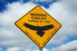 Australasian;Australia;Australian;eagle;eagle-sign;eagle-signs;eagle-warning-sign;eagle-warning-signs;eagles;eagles-feeding-on-road;eagles-sign;eagles-signs;eagles-warning-sign;eagles-warning-signs;Island-of-Tasmania;Northern-Tasmania;road-sign;road-signs;road_sign;road_signs;roads;roadsign;roadsigns;sign;signs;State-of-Tasmania;symbol;symbols;Tas;Tasmania;The-North;warn;warning;warning-sign;warning-signs;wildlife;wildlife-sign;wildlife-signs;wildlife-warning-sign;wildlife-warning-signs;yellow-black;yellow-sign;yellow-signs