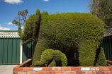 Australasian;Australia;Australian;Island-of-Tasmania;Northern-Tasmania;Railton;State-of-Tasmania;Tas;Tasmania;The-North;topiaries;Topiary;topiary-town