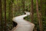 Australasian;Australia;Australian;beautiful;beauty;boardwalk;boardwalks;bush;endemic;forest;forests;Franklin-_-Gordon-Wild-Rivers-N.P.;Franklin-_-Gordon-Wild-Rivers-National-Park;Franklin-_-Gordon-Wild-Rivers-NP;Franklin-Gordon-Wild-Rivers-N.P.;Franklin-Gordon-Wild-Rivers-National-Park;Franklin-Gordon-Wild-Rivers-NP;green;hiking-track;hiking-tracks;Island-of-Tasmania;native;native-bush;natural;nature;Nelson-Falls;scene;scenic;State-of-Tasmania;Tas;Tasmania;Tasmanian-Wilderness-World-Heritage-Area;The-West;track;tracks;tramping-tack;tramping-tracks;tree;trees;walking-track;walking-tracks;West-Tasmania;Western-Tasmania;wood;woods;World-Heritage-Area;World-Heritage-Areas;World-Heritage-Site;World-Heritage-Sites