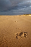 Australasian;Australia;Australian;beach;beaches;black-cloud;black-clouds;black-sky;cloud;cloudy;coast;coastal;coastline;dark-cloud;dark-clouds;dark-sky;foot-print;foot-prints;footmark;footprint;footprints;gray-cloud;gray-clouds;gray-sky;grey-cloud;grey-clouds;grey-sky;Island-of-Tasmania;Ocean-Beach;rain-cloud;rain-clouds;sand;sandy;State-of-Tasmania;storm;storm-clouds;storms;stormy;Strahan;Tas;Tasmania;The-West;track;tracks;West-Tasmania;Western-Tasmania
