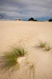 Australasia;Australasian;Australia;Australian;dune;dunes;Henty-Dunes;Henty-Sand-Dunes;Island-of-Tasmania;ripple;ripples;sand;sand-dune;sand-dunes;sand-hill;sand-hills;sand-ripple;sand-ripples;sand_dune;sand_dunes;sand_hill;sand_hills;sanddune;sanddunes;sandhill;sandhills;sandy;State-of-Tasmania;Strahan;Tas;Tasmania;The-West;West-Tasmania;Western-Tasmania;wind-ripple;wind-ripples
