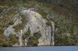 Australasian;Australia;Australian;bluff;bluffs;cliff;cliffs;Cradle-Mountain-_-Lake-St-Clair-National-Park;Cradle-Mt-_-Lake-St-Clair-National-Park;Dove-Lake;Dove-Lake-Circuit;geological;geology;Glacier-Rock;hike;hiker;hikers;hiking;hiking-track;hiking-tracks;Island-of-Tasmania;people;person;rock;rock-formation;rock-formations;rock-outcrop;rock-outcrops;rock-tor;rock-torr;rock-torrs;rock-tors;rocks;State-of-Tasmania;stone;Tas;Tasmania;The-West;tourism;tourist;tourists;tramp;tramper;trampers;tramping;tramping-tack;tramping-tracks;trek;treker;trekers;treking;trekker;trekkers;trekking;walk;walker;walkers;walking;walking-track;walking-tracks;West-Tasmania;Western-Tasmania