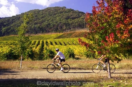 agricultural;agriculture;australasia;australasian;Australia;australian;autumn;autumn-colour;autumn-colours;autumnal;autumninal;avenue;avenues;bicycle;bicycles;bike;bikes;boynton-vineyard;boynton-winery;Boyntons-of-Bright-winery;Boyntons-of-Bright;Bright;color;colors;colour;colours;country;countryside;crop;crops;cultivation;cycle;cycler;cyclers;cycles;cyclist;cyclists;deciduous;fall;fall-color;fall-colors;farm;farming;farmland;farms;field;fields;foliage;golden;grape;grapes;grapevine;horticulture;leaf;leaves;mountain-bike;mountain-biker;mountain-bikers;mountain-bikes;mtn-bike;mtn-biker;mtn-bikers;mtn-bikes;Murray-to-the-Mountains-Rail-Tr;porepunkah;rail-trail;rail-trails;row;rows;rural;tourism;travel;tree;trees;victoria;vine;vines;vineyard;vineyards;vintage;wine;wineries;winery;wines;yellow