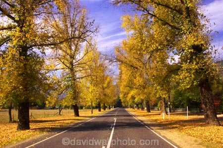 australasia;Australia;australian;autumn;autumn-colour;autumn-colours;autumnal;autumninal;avenue;avenues;boulevard;boulevards;Bright;centre-line;centre-lines;centre_line;centre_lines;centreline;centrelines;color;colors;colour;colours;deciduous;driving;fall;fall-color;fall-colors;foliage;highway;highways;leaf;leaves;open-road;open-roads;road;road-trip;roads;straight;transport;transportation;travel;traveling;travelling;tree;trees;trip;Victoria