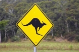 australasia;Australia;australian;bright;forest;forests;kangaroo;Kangaroo-Warning-Sign;kangaroos;natural;nature;Road;road-sign;road-signs;road_sign;road_signs;roads;roadsign;roadsigns;sign;signs;symbol;symbols;tranportation;transport;travel;Victoria;warn;yellow