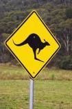 australasia;Australia;australian;bright;forest;forests;kangaroo;Kangaroo-Warning-Sign;kangaroos;natural;nature;Road;road-sign;road-signs;road_sign;road_signs;roads;roadsign;roadsigns;sign;signs;symbol;symbols;tranportation;transport;travel;Victoria;warn;yellow