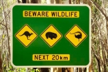 australasia;australia;australian;beware-wildlife;bird;birds;kangaroo;Kangaroo-Warning-Sign;kangaroos;Lasiorhinus-latrifrons;lyre-bird;lyre-birds;lyre_bird;lyre_birds;lyrebird;lyrebirds;mount-buffalo-n.p.;mount-buffalo-national-park;mount-buffalo-np;mt-buffalo-n.p.;mt-buffalo-national-park;mt-buffalo-np;mt.-buffalo-n.p.;mt.-buffalo-national-park;mt.-buffalo-np;natural;nature;next-20-km;next-20km;next-twenty-kilometres;Road;road-sign;road-signs;road_sign;road_signs;roads;roadsign;roadsigns;sign;signs;symbol;symbols;tranportation;transport;travel;victoria;warn;warning;wildlife;wombat;wombats;yellow-black