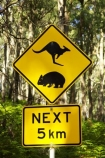 australasia;australia;australian;kangaroo;Kangaroo-Warning-Sign;kangaroos;Lasiorhinus-latrifrons;mount-buffalo-n.p.;mount-buffalo-national-park;mount-buffalo-np;mt-buffalo-n.p.;mt-buffalo-national-park;mt-buffalo-np;mt.-buffalo-n.p.;mt.-buffalo-national-park;mt.-buffalo-np;natural;nature;next-5-km;next-five-kilometres;Road;road-sign;road-signs;road_sign;road_signs;roads;roadsign;roadsigns;sign;signs;symbol;symbols;tranportation;transport;travel;victoria;warn;warning;wildlife;wombat;wombats;yellow-black