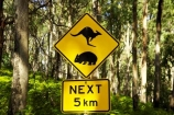 australasia;australia;australian;kangaroo;Kangaroo-Warning-Sign;kangaroos;Lasiorhinus-latrifrons;mount-buffalo-n.p.;mount-buffalo-national-park;mount-buffalo-np;mt-buffalo-n.p.;mt-buffalo-national-park;mt-buffalo-np;mt.-buffalo-n.p.;mt.-buffalo-national-park;mt.-buffalo-np;natural;nature;next-5-km;next-five-kilometres;Road;road-sign;road-signs;road_sign;road_signs;roads;roadsign;roadsigns;sign;signs;symbol;symbols;tranportation;transport;travel;victoria;warn;warning;wildlife;wombat;wombats;yellow-black