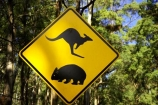 australasia;australia;australian;kangaroo;Kangaroo-Warning-Sign;kangaroos;Lasiorhinus-latrifrons;mount-buffalo-n.p.;mount-buffalo-national-park;mount-buffalo-np;mt-buffalo-n.p.;mt-buffalo-national-park;mt-buffalo-np;mt.-buffalo-n.p.;mt.-buffalo-national-park;mt.-buffalo-np;natural;nature;Road;road-sign;road-signs;road_sign;road_signs;roads;roadsign;roadsigns;sign;signs;symbol;symbols;tranportation;transport;travel;victoria;warn;warning;wildlife;wombat;wombats;yellow-black