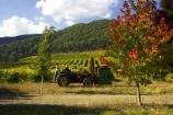 agricultural;agriculture;australasia;australasian;australia;australian;autumn;boynton-vineyard;boynton-winery;Boyntons-of-Bright-winery;Boyntons-of-Bright;bright;country;countryside;crop;crops;cultivation;fall;farm;farming;farmland;farms;field;fields;grape;grapes;grapevine;horticulture;picking;porepunkah;row;rows;rural;tractor;tractors;victoria;vine;vines;vineyard;vineyards;vintage;wine;wineries;winery;wines;working