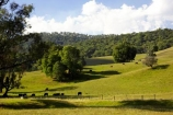 agricultural;agriculture;australasia;australia;australian;country;countryside;farm;farming;farmland;farms;field;fields;horticulture;meadow;meadows;paddock;paddocks;pasture;pastures;porepunkah;rural;victoria