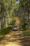 4wd;4wds;4wds;4x4;4x4s;4x4s;australasia;Australia;australian;beautiful;beauty;Bright;bush;countryside;dusty;endemic;eucalypt;eucalypts;eucalyptus;eucalytis;forest;forests;four-by-four;four-by-fours;four-wheel-drive;four-wheel-drives;gravel-road;gravel-roads;green;gum;gum-tree;gum-trees;gums;landcruiser;landcruisers;metal-road;metal-roads;metalled-road;metalled-roads;native;native-bush;natives;natural;nature;road;roads;rural;scene;scenic;suv;suvs;timber;toyota;toyotas;track;tracks;tree;tree-trunk;tree-trunks;trees;trunk;trunks;vehicle;vehicles;victoria;wood;woods