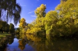 australasia;Australia;australian;autumn;autumn-colour;autumn-colours;autumnal;autumninal;Bright;brook;brooks;calm;color;colors;colour;colours;creek;creeks;deciduous;fall;fall-color;fall-colors;flow;foliage;golden;leaf;leaves;pool;porepunkah;reflection;reflections;river;rivers;still;stream;streams;tree;trees;Victoria;water;wet;willows;yellow