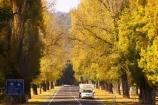australasia;Australia;australian;autumn;autumn-colour;autumn-colours;autumnal;autumninal;avenue;avenues;boulevard;boulevards;Bright;camper;campers;caravan;caravans;centre-line;centre-lines;centre_line;centre_lines;centreline;centrelines;color;colors;colour;colours;deciduous;driving;fall;fall-color;fall-colors;foliage;highway;highways;holiday;holidays;leaf;leaves;open-road;open-roads;road;road-trip;roads;straight;tour;touring;tourism;tourist;tourists;trailer;transport;transportation;travel;traveler;travelers;traveling;traveller;travellers;travelling;tree;trees;trip;vacation;vacations;Victoria
