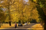 australasia;Australia;australian;automobile;automobiles;autumn;autumn-colour;autumn-colours;autumnal;autumninal;avenue;avenues;bike;biker;bikers;bikes;boulevard;boulevards;Bright;car;cars;centre-line;centre-lines;centre_line;centre_lines;centreline;centrelines;color;colors;colour;colours;deciduous;driving;fall;fall-color;fall-colors;foliage;highway;highways;leaf;leaves;motorbike;motorbiker;motorbikers;motorbikes;motorcycle;motorcycles;motorcyclist;motorcyclists;open-road;open-roads;road;road-trip;roads;straight;tranportation;transport;transportation;travel;traveling;travelling;tree;trees;trip;trips;vehicle;vehicles;Victoria