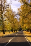 australasia;Australia;australian;autumn;autumn-colour;autumn-colours;autumnal;autumninal;avenue;avenues;boulevard;boulevards;Bright;camper;camper-van;camper-vans;camper_van;camper_vans;campers;campervan;campervans;centre-line;centre-lines;centre_line;centre_lines;centreline;centrelines;color;colors;colour;colours;deciduous;driving;fall;fall-color;fall-colors;foliage;highway;highways;holiday;holidays;leaf;leaves;motor-caravan;motor-caravans;motor-home;motor-homes;motor_home;motor_homes;motorhome;motorhomes;open-road;open-roads;road;road-trip;roads;straight;tour;touring;tourism;tourist;tourists;transport;transportation;travel;traveler;travelers;traveling;traveller;travellers;travelling;tree;trees;trip;vacation;vacations;van;vans;Victoria