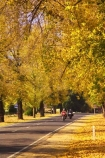 australasia;Australia;australian;autumn;autumn-colour;autumn-colours;autumnal;autumninal;avenue;avenues;bike;biker;bikers;bikes;boulevard;boulevards;Bright;centre-line;centre-lines;centre_line;centre_lines;centreline;centrelines;color;colors;colour;colours;deciduous;driving;fall;fall-color;fall-colors;foliage;highway;highways;leaf;leaves;motorbike;motorbiker;motorbikers;motorbikes;motorcycle;motorcycles;motorcyclist;motorcyclists;open-road;open-roads;road;road-trip;roads;straight;transport;transportation;travel;traveling;travelling;tree;trees;trip;Victoria