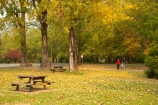 Australia;autuminal;autumn;autumn-colour;autumn-colours;autumnal;color;colors;colour;colours;deciduous;East-Victoria;Eastern-Victoria;fall;leaf;leaves;Mount-Beauty;Mt-Beauty;Mt.-Beauty;picnic-area;picnic-areas;picnic-table;picnic-tables;rest-area;rest-areas;season;seasonal;seasons;tree;trees;VIC;Victoria;yellow