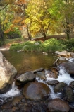 Australia;autuminal;autumn;autumn-colour;autumn-colours;autumnal;Bogong;Bogong-Village;brook;brooks;color;colors;colour;colours;creek;creeks;deciduous;East-Victoria;Eastern-Victoria;fall;flow;leaf;leaves;maple;maples;Mount-Beauty;Mt-Beauty;Mt.-Beauty;Rocky-Valley-Creek;season;seasonal;seasons;stream;streams;tree;trees;VIC;Victoria;Victorian-Alps;water;wet;yellow