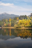 Alpine-N.P.;Alpine-National-Park;Alpine-NP;Australia;autuminal;autumn;autumn-colour;autumn-colours;autumnal;Bogong;Bogong-Village;calm;color;colors;colour;colours;deciduous;East-Victoria;Eastern-Victoria;fall;hill;hills;Junction-Dam;lake;Lake-Guy;lakes;leaf;leaves;Mount-Beauty;Mt-Beauty;Mt.-Beauty;placid;quiet;reflection;reflections;season;seasonal;seasons;serene;smooth;still;tranquil;tree;trees;VIC;Victoria;Victorian-Alps;water;yellow