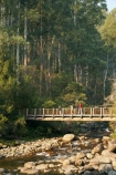 Australia;Bogong;Bogong-Village;bridge;bridges;brook;brooks;child;children;creek;creeks;East-Victoria;Eastern-Victoria;eucalypt;eucalypts;eucalyptus;eucalytis;flow;foot-bridge;foot-bridges;footbridge;footbridges;gum;gum-tree;gum-trees;gums;hike;hiker;hikers;hiking;hiking-track;hiking-tracks;kid;kids;mother;Mount-Beauty;Mt-Beauty;Mt.-Beauty;parent;pedestrian-bridge;pedestrian-bridges;people;person;Rocky-Valley-Creek;stream;streams;track;tracks;tramp;tramper;trampers;tramping;tramping-tack;tramping-tracks;tree;trees;trek;treker;trekers;treking;trekker;trekkers;trekking;VIC;Victoria;Victorian-Alps;walk;walker;walkers;walking;walking-track;walking-tracks;water;wet;woman