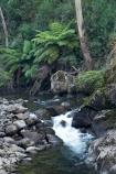 Australia;Bogong;Bogong-Village;brook;brooks;creek;creeks;cyathea;East-Victoria;Eastern-Victoria;fern;ferns;flora;flow;forest;forestry;forests;frond;fronds;green;lush;Mount-Beauty;Mt-Beauty;Mt.-Beauty;native-bush;outdoor;outdoors;plant;plants;Pretty-Valley-Creek;stream;streams;tree-fern;tree-ferns;VIC;Victoria;Victorian-Alps;water;watercourse;wet