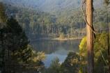 Alpine-N.P.;Alpine-National-Park;Alpine-NP;Australia;Bogong;Bogong-Village;calm;East-Victoria;Eastern-Victoria;eucalypt;eucalypts;eucalyptus;eucalytis;gum;gum-tree;gum-trees;gums;Junction-Dam;lake;Lake-Guy;lakes;Mount-Beauty;Mt-Beauty;Mt.-Beauty;placid;quiet;reflection;reflections;serene;smooth;still;tranquil;tree;trees;VIC;Victoria;Victorian-Alps;water