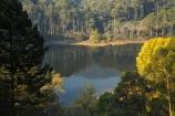 Alpine-N.P.;Alpine-National-Park;Alpine-NP;Australia;autuminal;autumn;autumn-colour;autumn-colours;autumnal;Bogong;Bogong-Village;color;colors;colour;colours;deciduous;East-Victoria;eastern-Victoria;eucalypt;eucalypts;eucalyptus;eucalytis;fall;gum;gum-tree;gum-trees;gums;Junction-Dam;lake;Lake-Guy;lakes;leaf;leaves;Mount-Beauty;Mt-Beauty;Mt.-Beauty;season;seasonal;seasons;tree;trees;VIC;Victoria;Victorian-Alps;yellow