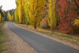australasia;Australia;australian;autuminal;autumn;autumn-colour;autumn-colours;autumnal;autumninal;avenue;avenues;boulevard;boulevards;Bright;color;colors;colour;colours;cycle-trail;cycle-trails;cycleway;cycleways;deciduous;East-Victoria;Eastern-Victoria;fall;fall-color;fall-colors;foliage;golden;leaf;leaves;Murray-to-the-Mountains-Rail-Trail;poplar;poplar-tree;poplar-trees;poplars;rail-trail;rail-trails;season;seasonal;seasons;tourism;travel;tree;trees;VIC;Victoria;yellow