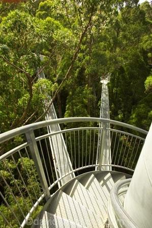 aerial-walkway;aerials-walkways;australasia;Australia;australian;bridge;bridges;bush;canopy;canopy-walk;ecotourism;engineering;eucalyptis;eucalypts;forest;forest-canopy;forests;galvanised;galvanized;great-ocean-road;gum;gums;high;high-up;lush;luxuriant;metal;native-bush;native-forest;native-forests;natural;nature;Otway-Fly;otway-range;Otway-Ranges;plant;plants;rain-forest;rain-forests;rain_forests;rainforest;rainforest-canopy;rainforest-walk;rainforests;spiral-staircase;spiral-stairs;spiral-stairway;spiral-tower;steel;structure;structures;tower;towers;tree;Tree-Top-Walk;trees;vegetation;verdant;vertigo;Victoria;walkway;walkways