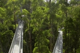aerial-walkway;aerials-walkways;australasia;Australia;australian;bridge;bridges;bush;canopy;canopy-walk;ecotourism;engineering;eucalyptis;eucalypts;forest;forest-canopy;forests;galvanised;galvanized;great-ocean-road;gum;gums;high;high-up;lush;luxuriant;metal;native-bush;native-forest;native-forests;natural;nature;Otway-Fly;otway-range;Otway-Ranges;plant;plants;rain-forest;rain-forests;rain_forests;rainforest;rainforest-canopy;rainforest-walk;rainforests;steel;structure;structures;tree;Tree-Top-Walk;trees;vegetation;verdant;vertigo;Victoria;walkway;walkways