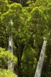 aerial-walkway;aerials-walkways;australasia;Australia;australian;bridge;bridges;bush;canopy;canopy-walk;eco-tourism;eco-tourist;eco-tourists;ecotourism;ecotourist;ecotourists;engineering;eucalyptis;eucalypts;forest;forest-canopy;forests;galvanised;galvanized;great-ocean-road;gum;gums;high;high-up;lush;luxuriant;metal;native-bush;native-forest;native-forests;natural;nature;Otway-Fly;otway-range;Otway-Ranges;people;person;plant;plants;rain-forest;rain-forests;rain_forests;rainforest;rainforest-canopy;rainforest-walk;rainforests;steel;structure;structures;tourism;tourist;tourists;travel;tree;Tree-Top-Walk;tree-trunk;tree-trunks;trees;vegetation;verdant;vertigo;Victoria;walkway;walkways