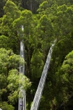 aerial-walkway;aerials-walkways;australasia;Australia;australian;bridge;bridges;bush;canopy;canopy-walk;eco-tourism;eco-tourist;eco-tourists;ecotourism;ecotourist;ecotourists;engineering;eucalyptis;eucalypts;forest;forest-canopy;forests;galvanised;galvanized;great-ocean-road;gum;gums;high;high-up;lush;luxuriant;metal;native-bush;native-forest;native-forests;natural;nature;Otway-Fly;otway-range;Otway-Ranges;people;person;plant;plants;rain-forest;rain-forests;rain_forests;rainforest;rainforest-canopy;rainforest-walk;rainforests;steel;structure;structures;tourism;tourist;tourists;travel;tree;Tree-Top-Walk;trees;vegetation;verdant;vertigo;Victoria;walkway;walkways