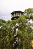 aerial-walkway;aerials-walkways;australasia;Australia;australian;bridge;bridges;bush;canopy;canopy-walk;eco-tourism;eco-tourist;eco-tourists;ecotourism;ecotourist;ecotourists;engineering;eucalyptis;eucalypts;forest;forest-canopy;forests;galvanised;galvanized;great-ocean-road;gum;gums;high;high-up;lush;luxuriant;metal;native-bush;native-forest;native-forests;natural;nature;Otway-Fly;otway-range;Otway-Ranges;people;person;plant;plants;rain-forest;rain-forests;rain_forests;rainforest;rainforest-canopy;rainforest-walk;rainforests;spiral-staircase;spiral-stairs;spiral-stairway;spiral-tower;steel;structure;structures;tourism;tourist;tourists;tower;towers;travel;tree;Tree-Top-Walk;trees;vegetation;verdant;vertigo;Victoria;walkway;walkways