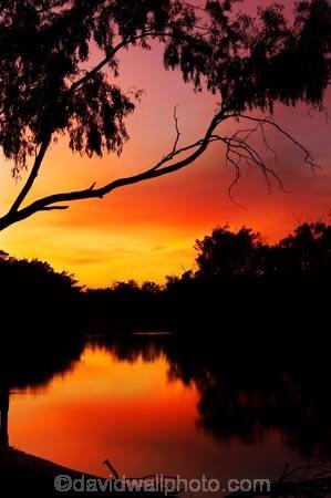 australasia;Australia;australian;break-of-day;dawn;dawning;daybreak;dusk;echica;eucalypt;eucalypts;eucalyptus;eucalytis;evening;first-light;gum;gum-tree;gum-trees;gums;Moama;morning;Murray-River;n.s.w.;New-South-Wales;nightfall;nsw;orange;reflection;reflections;river;rivers;silhouette;silhouettes;sky;sunrise;sunrises;sunset;sunsets;sunup;twilight;Victoria